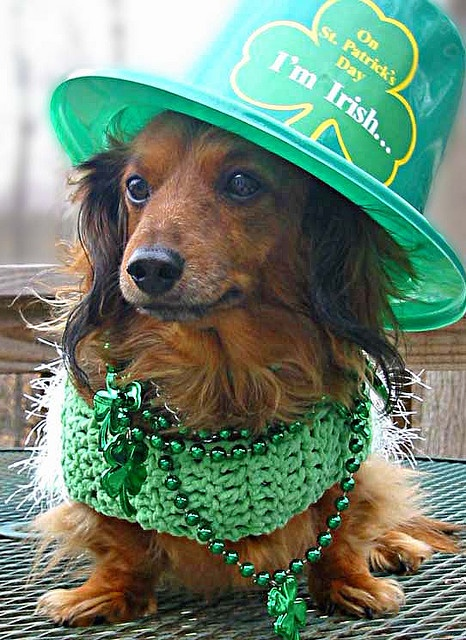 Our Heidi dressed up for St. Patrick's Day in 2006.