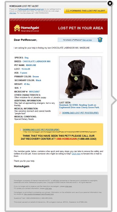 Pet Rescuer Email