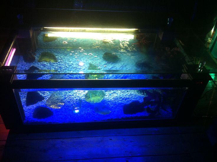 Coffee Table Fish Tank Fabulous Fish Tanks Pinterest
