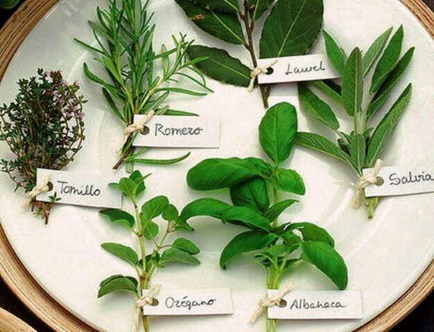 Hierbas arom ticas la esperanza pinterest - Plantas aromaticas en la cocina ...