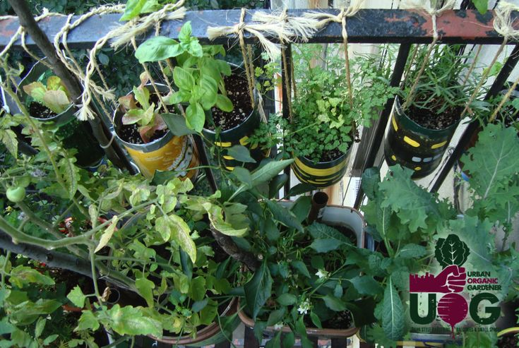pin by flp business science industry on urban farming