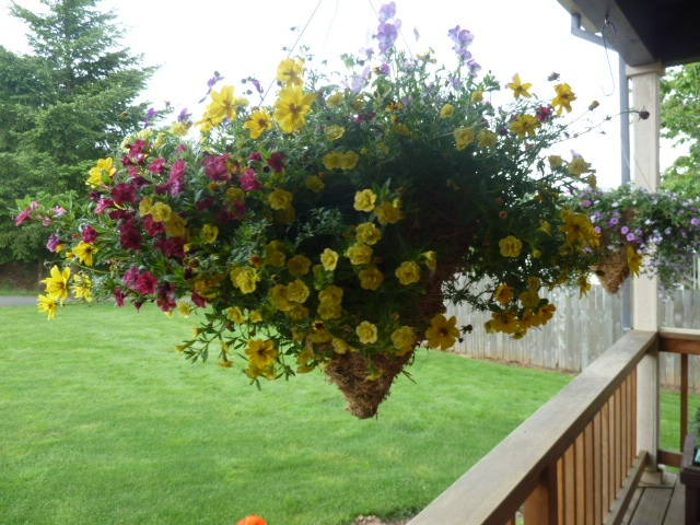 Hanging Basket Flowers Part Shade : Of hanging baskets partial shade gardens flowers