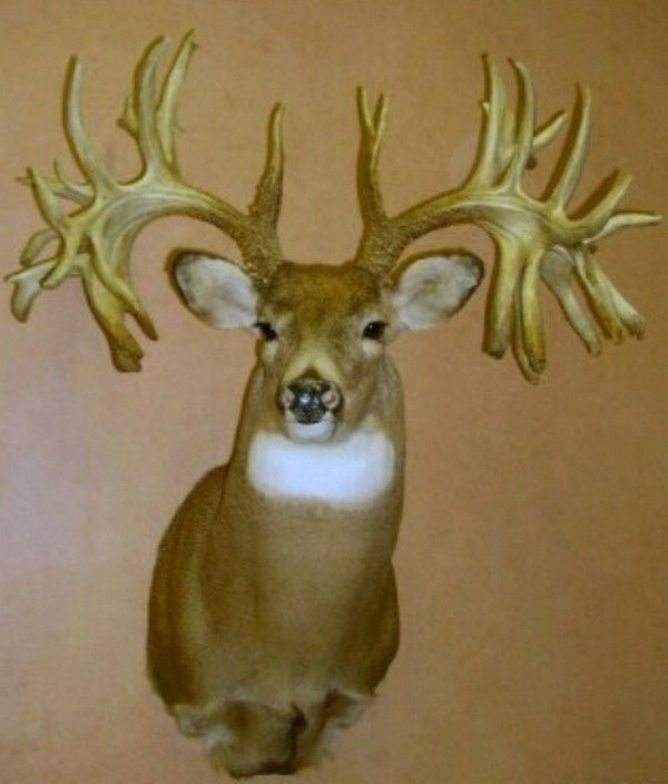 Missouri Monarch: The World Record Non-Typical Whitetail Buck