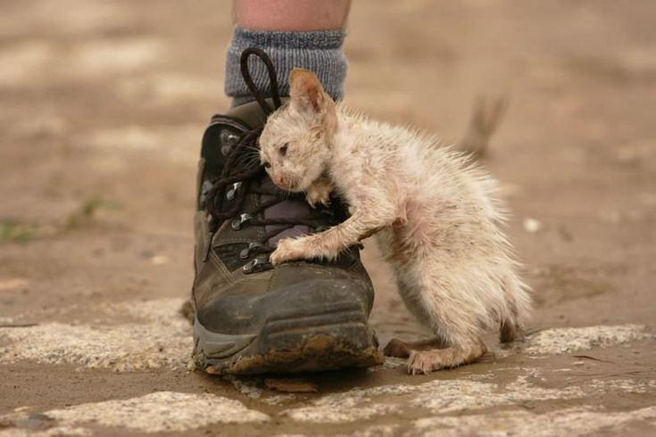 Kitten From October 2011 Floods in Thailand...