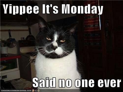 i hate mondays cats ���� pinterest