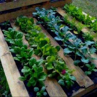 skid garden gardening pinterest