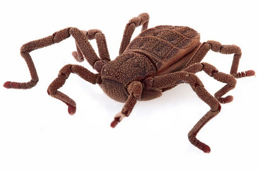 Not a toy, but a living arachnid called the Dinospider. They have hardly changed in 300 million years.