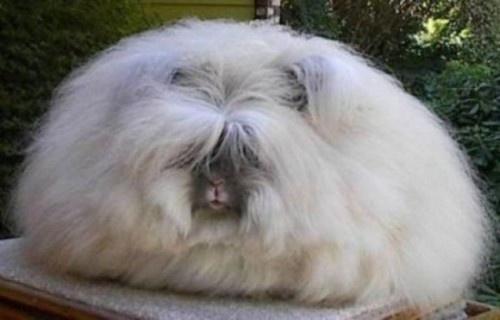 Haha, everyone wants a fat bunny rabbit! :D