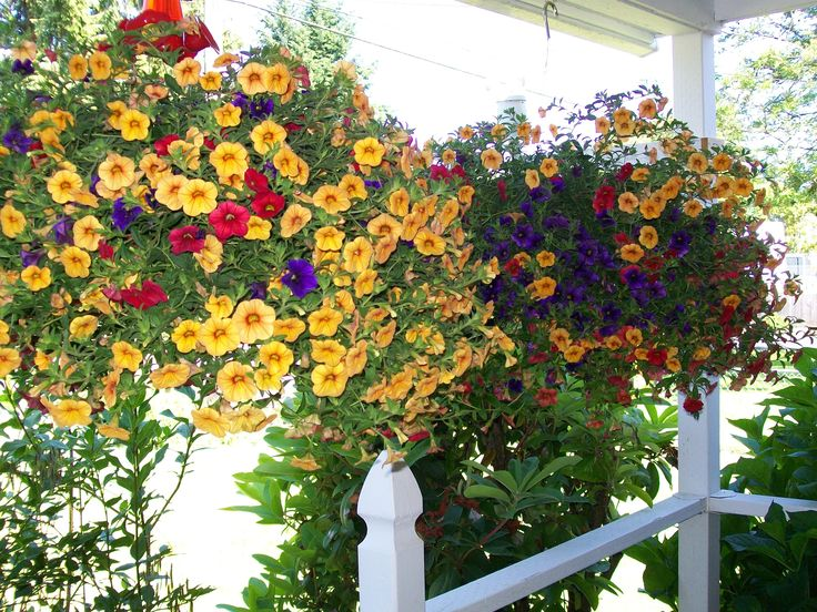 Front Porch With Hanging Baskets For The Love Of Flowers
