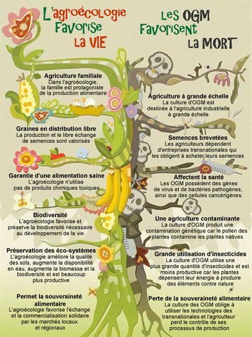 Bio vs OGM