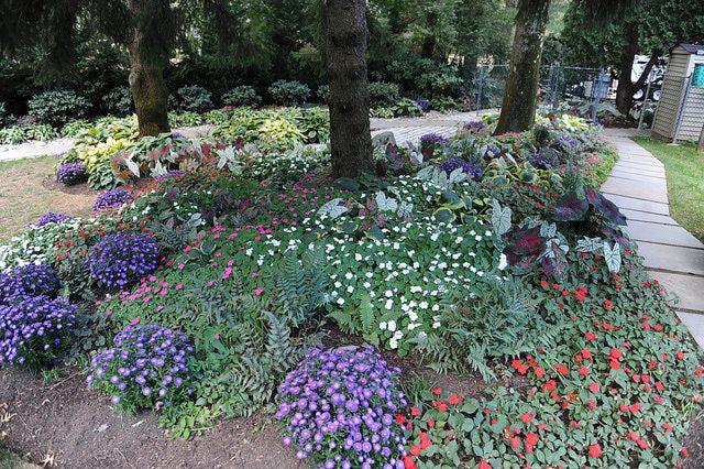 Partial shade plants front garden ideas pinterest for Part shade garden designs