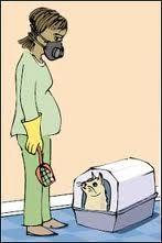Pregnancy Cat Litter