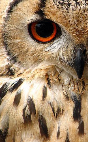 Owl up-close. Stunning.