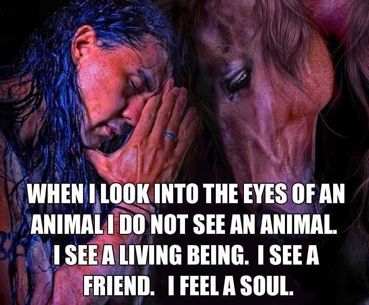 animals have feelings just like humans essay Should animals be treated equally to humans are hurt they will feel like us people dont respect animals because animals should have just as much.