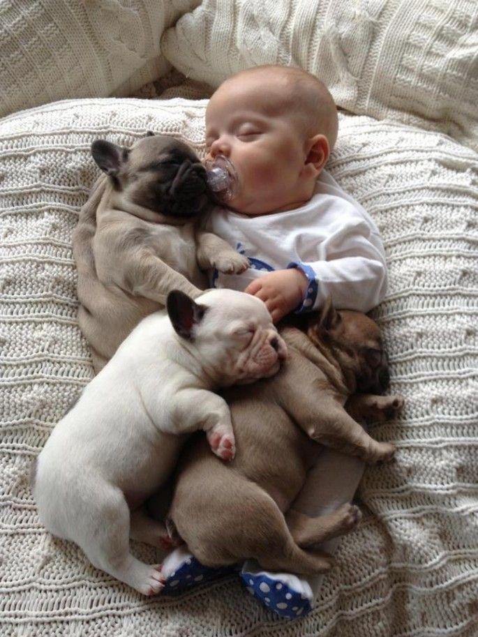 Baby with bulldog puppies