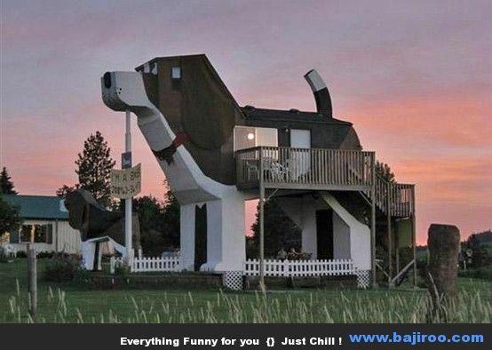 Extreme Dog Houses Images