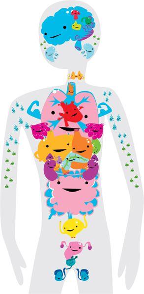 Meet your organs.