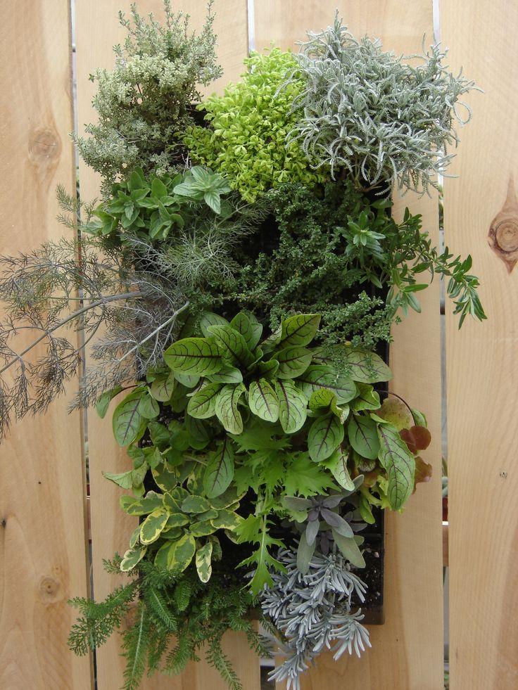 Pin By Garden House Design On Living Walls Pinterest