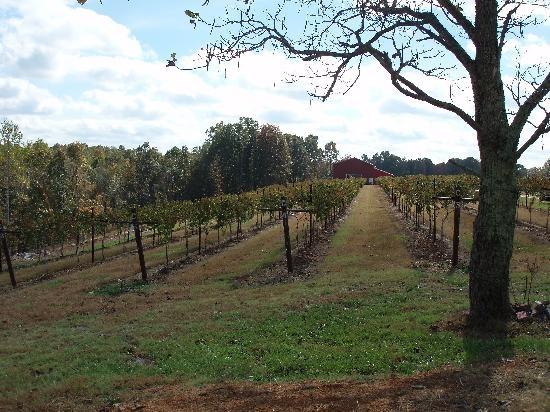 Amber Falls Winery  Jan 2012  Tennessee
