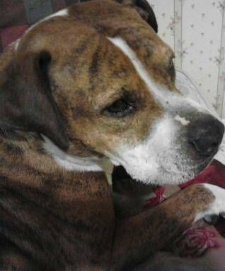 Craig+List+Lost+Dogs From Craigslist : REWARD LOST DOG (Helen Dr ...