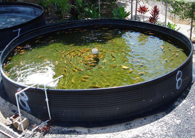 Pin by joseph gallant on preppers aquaponics for Aquaponics hawaii