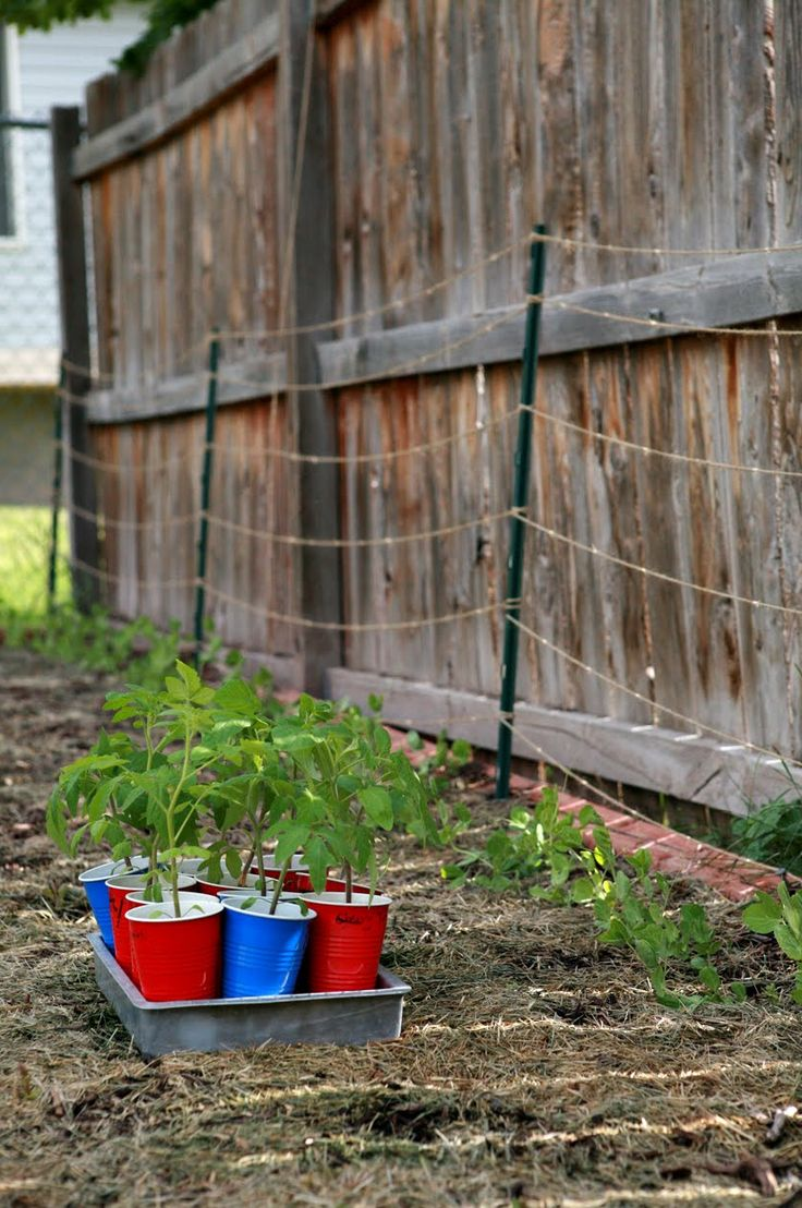 Backyard Farming Ideas