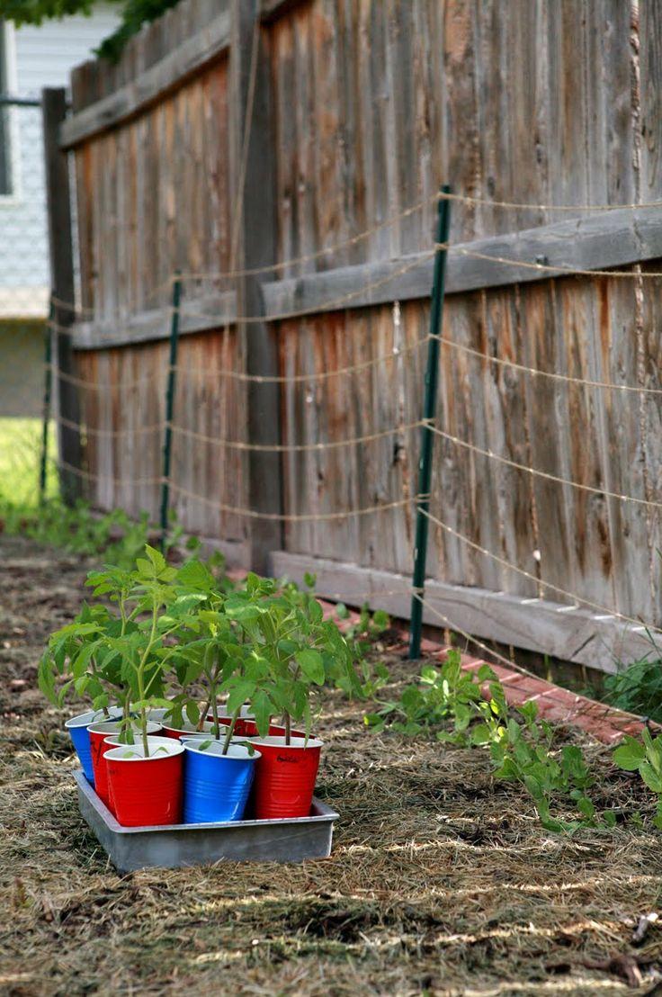 Backyard Farming Ideas