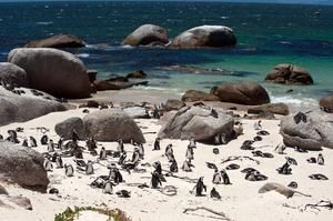 tripbucket | Dream: Explore Table Mountain National Park & Cape of Good Hope, South Africa (UNESCO site)