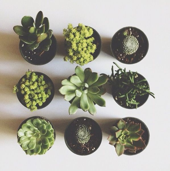 Pretty Things - Succulents