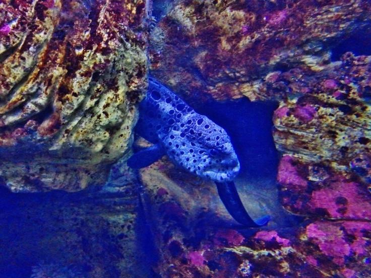 Newport Aquarium Beautiful Oregon And Its Amazing People