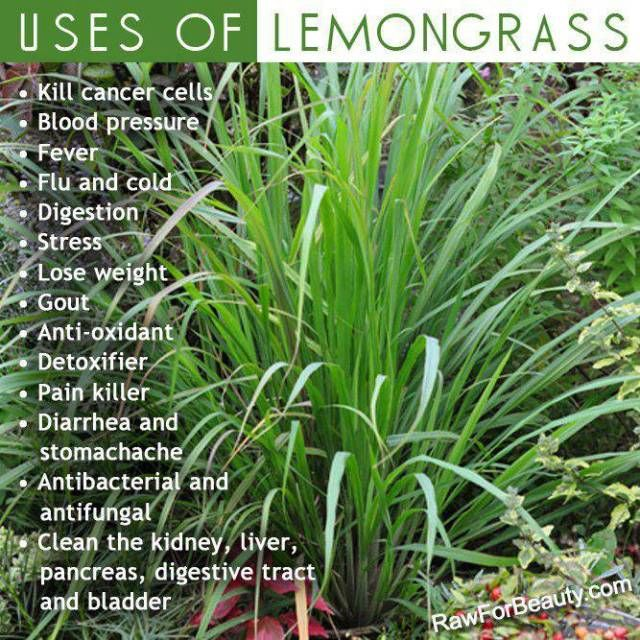 lemon grass benefits Uses of lemongrass for the face skip the expensive store-bought toners and make a simple, clarifying and moisturizing treatment for morning or evening the antibacterial, antiseptic and brightening effects of lemongrass essential oil marries with a soothing carrier oil for a surprisingly simple, yet gentle, final product.
