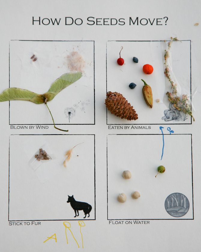 Seed Dispersal All Educational Is The Hydrologic Cycle Information