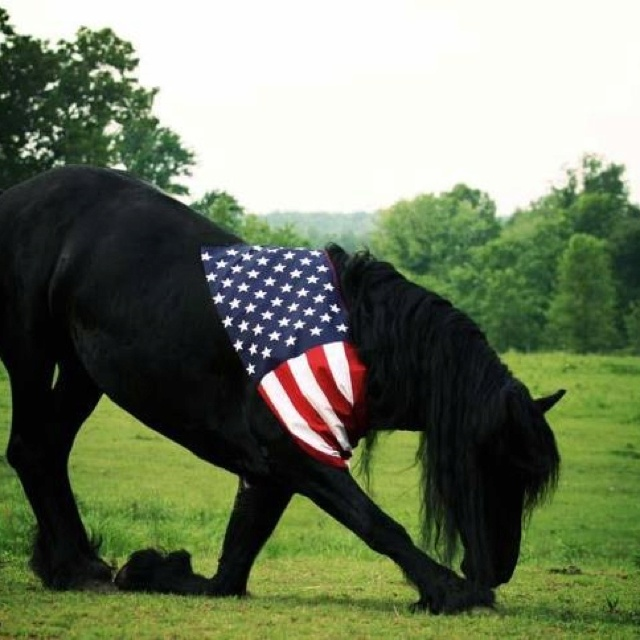 4th of july horse decorations
