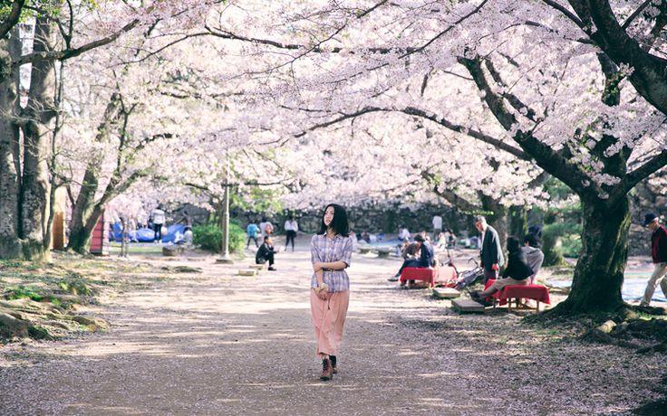 「桜の春めく」-人像摄影-POCO摄影作品展示 Found on photo.poco.cn