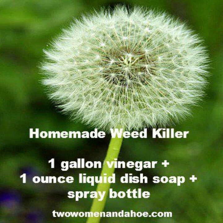 Top 10 homemade weedkillers that will kill the weeds without killing
