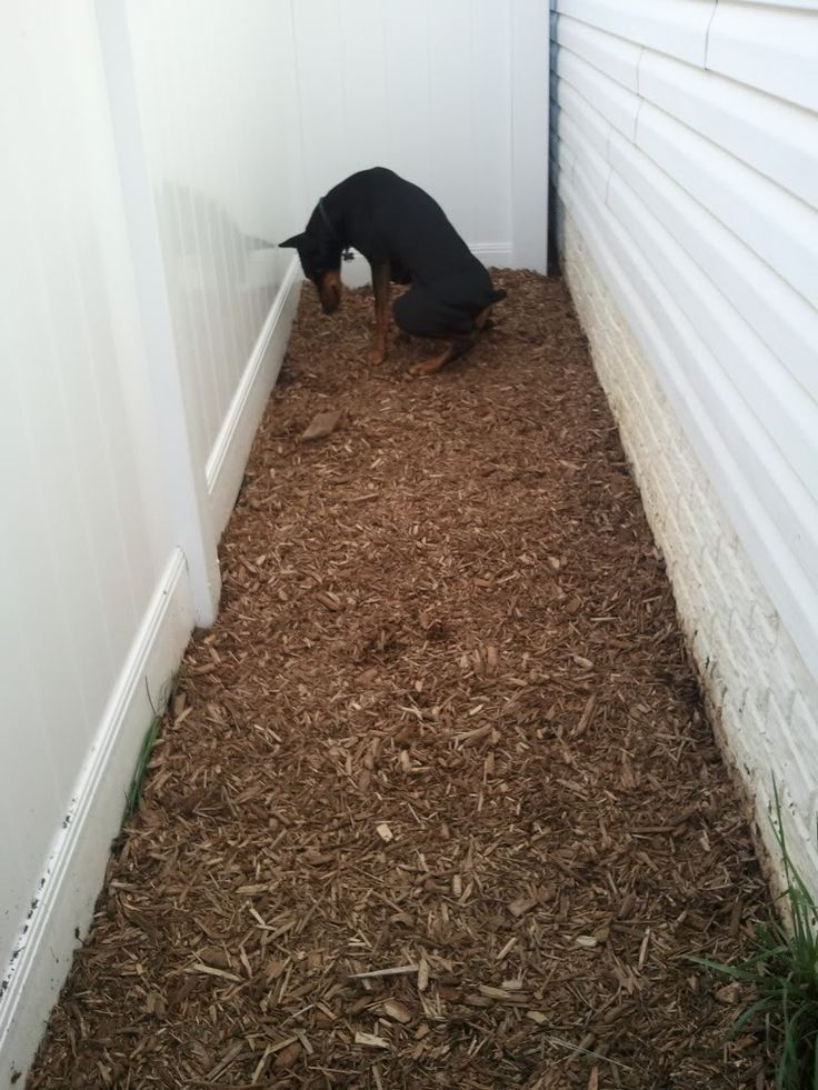 save your lawn from dog feces and urination potty area how to