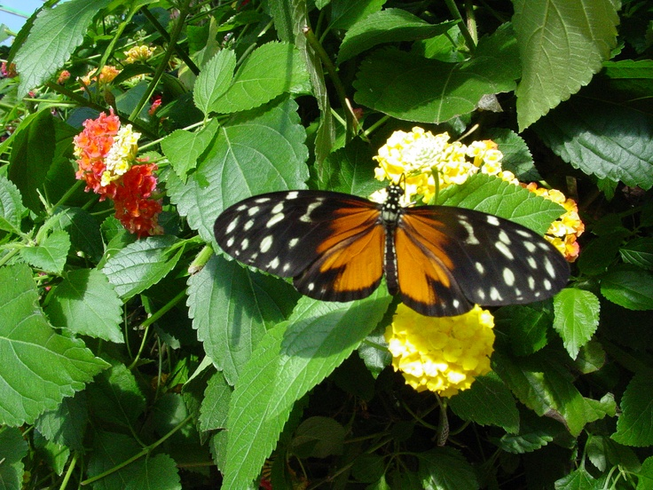 Victoria Butterfly Gardens Victoria Bc Places I Have