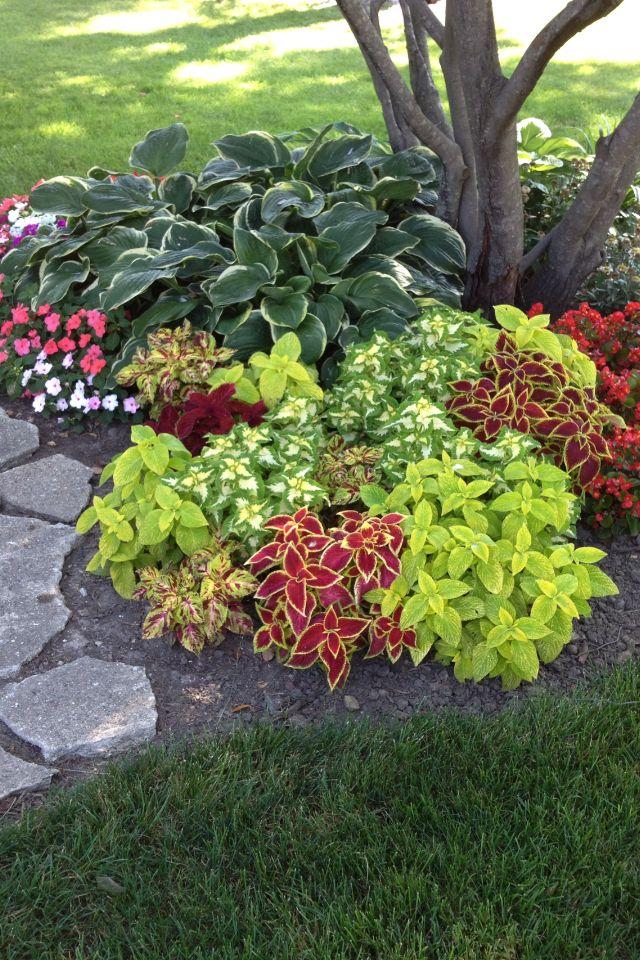 Coleus dusty miller impatients my shade garden pinterest for Easy to keep garden plants