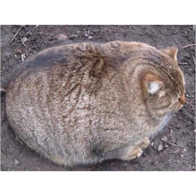 bowling ball cat