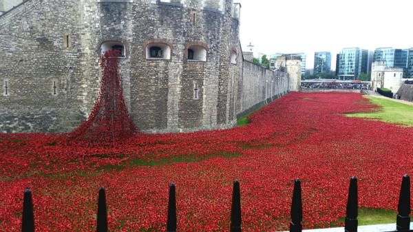 The poppies keep coming!