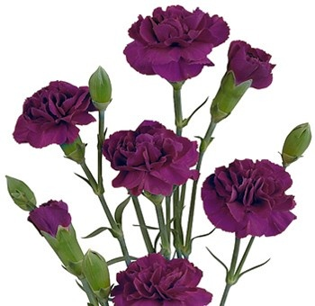 Pin by wedding flowers on carnations pinterest for Flowers that represent love