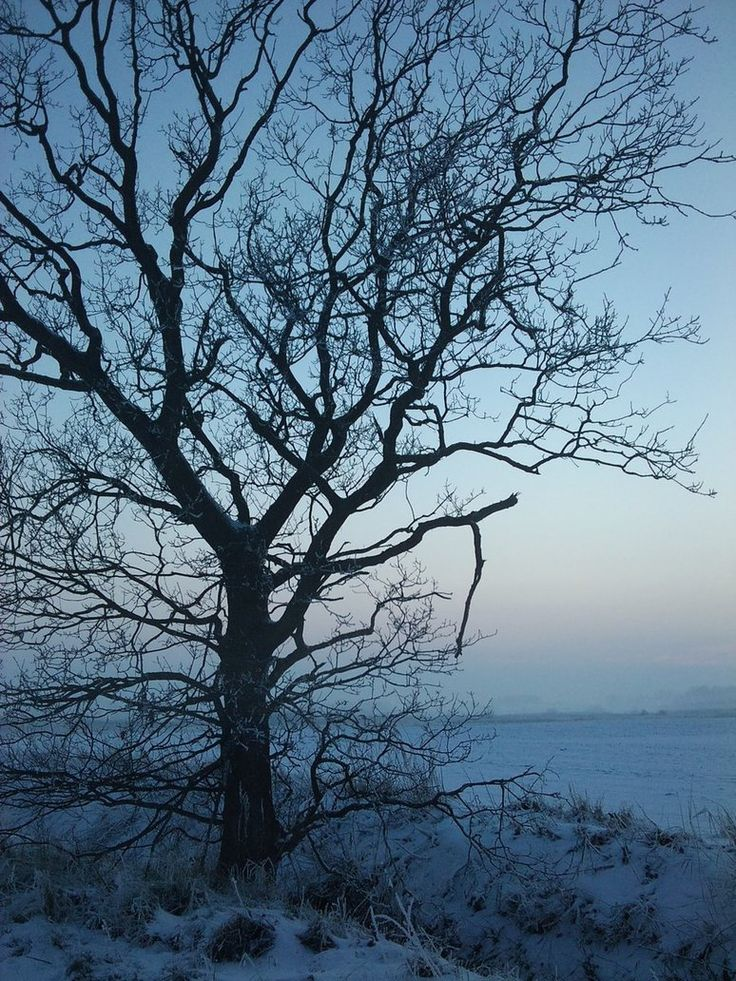 winter tree - Google Search | | Pinterest Pictures Trees In Winter Pinterest