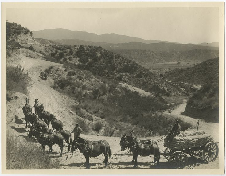 """Photograph of a pack of mules hauling bags of cement for construction of the Los Angeles Aqueduct. Caption on reverse reads """"hauling cement to mixer north end Deadman syphen [sic].""""  Catherine Mulholland Collection. Water Works - Documenting Water History in Los Angeles."""