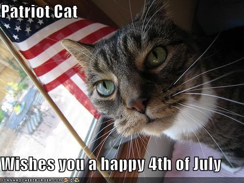 july 4th cat pictures