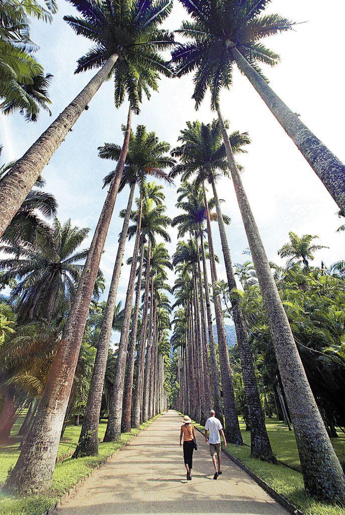 RIO DE JANEIRO  Jardim Botânico  Trees  Pinterest
