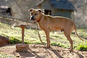 help stop dog fighting Find out how to break up a dog fight and learn in-person help let loud dog arguments the interventions that i think likeliest to stop a serious fight or.