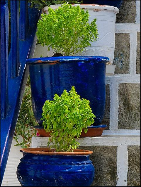 Mykonos - blue pots on steps
