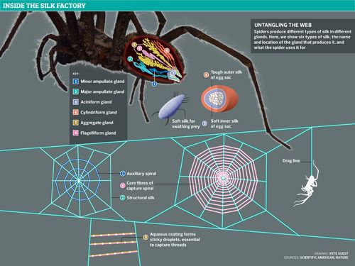 Pin by kea clearsky on science space sociology pinterest for What do we use silk for