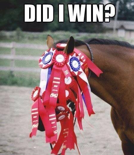 Funny Horse Rider Quotes. QuotesGram