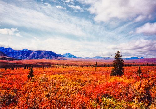 Autumn Tundra by Brent Danley